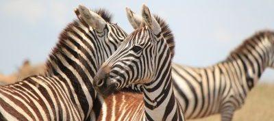 Equatorial Safaris, Arusha, Tanzania